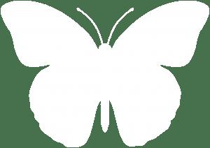 butterfly-300x212